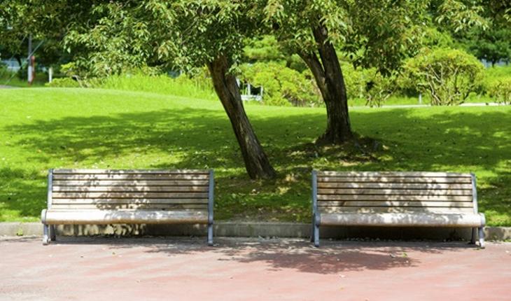 trees-bench.jpg